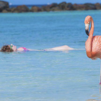 Flamingo beach op Aruba