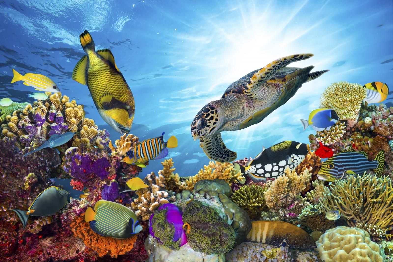 Het Great Barrier Reef biedt de meest prachtig gekleurde koralen, vissen en zeeschilpadden
