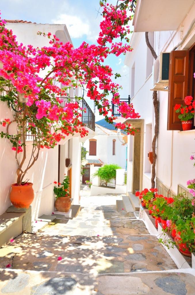 Straat met roze bloemen in Skopelos, Griekenland