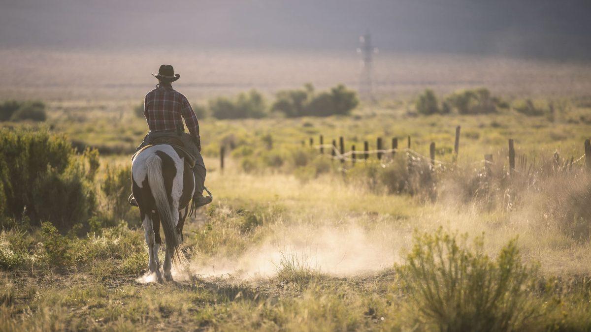 cowboy zand