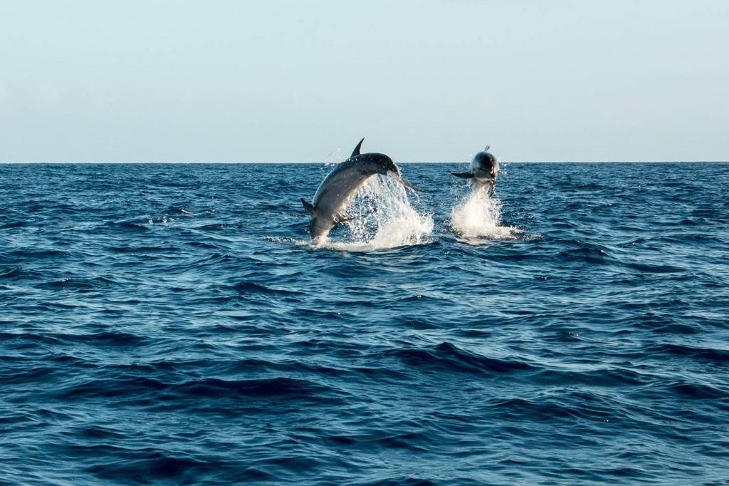 Springende dolfijnen uit zee