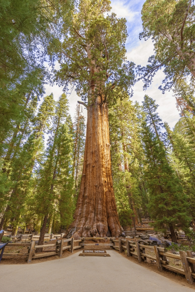General Sherman Tree in Sequoia National Park, Verenigde Staten