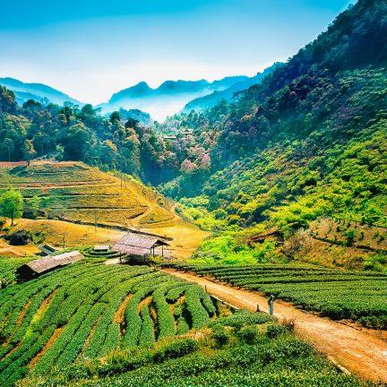 Uitzicht over een vallei met theeplantages in Chiang Mai, Thailand