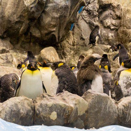 Pinguïns in Loro Parque, Tenerife