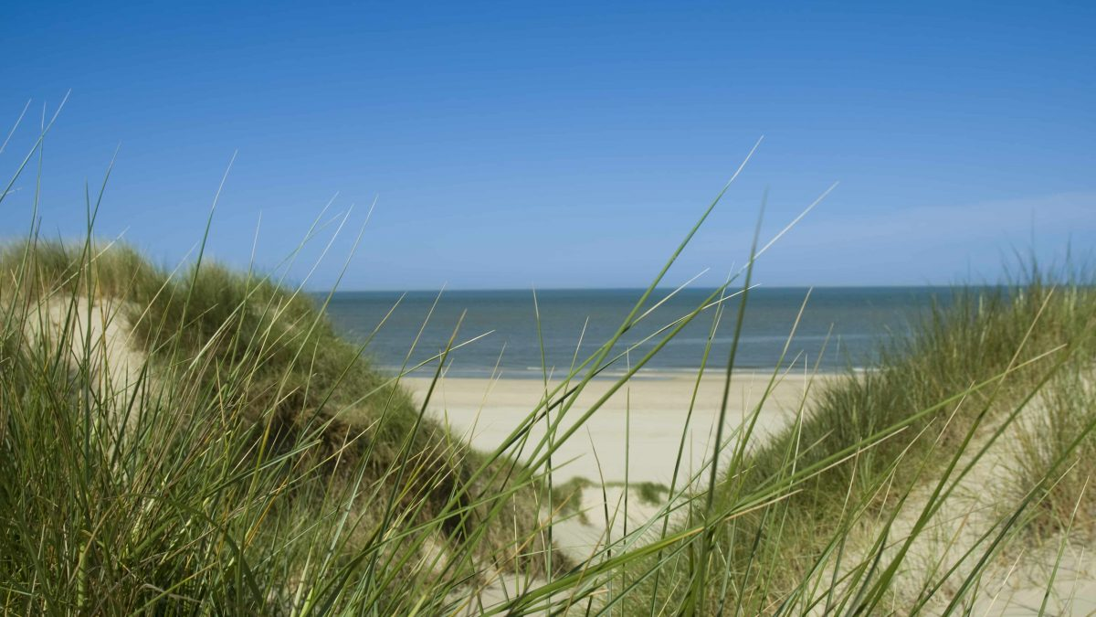 Duinen in Bergen aan Zee, Noord-Holland