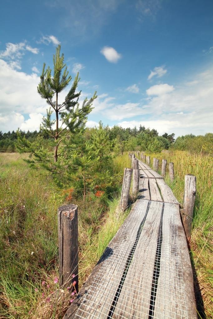 Houten pad in Dwingelderveld, Drenthe