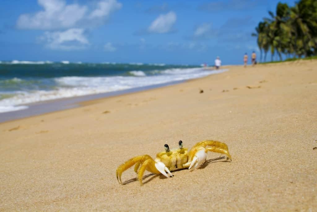 Krab op het strand van Maceió, Brazilië