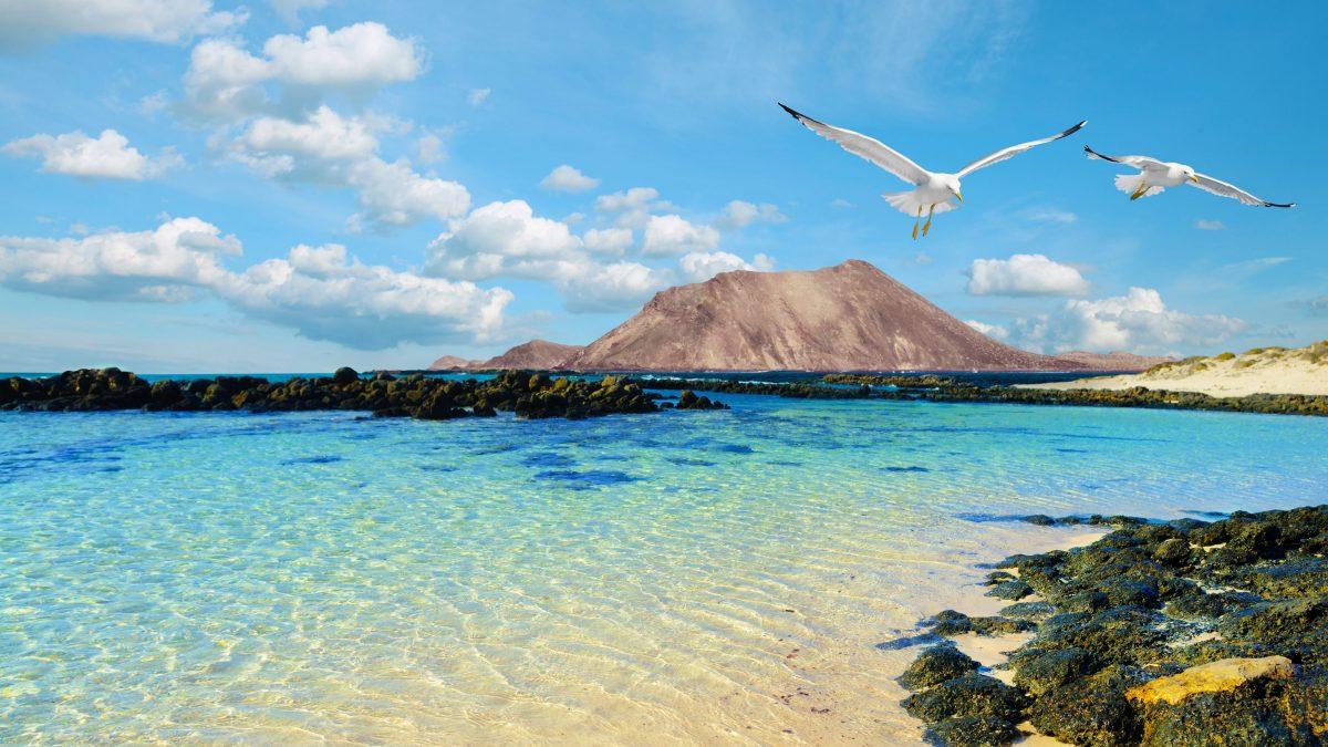meeuwen strand rotsen lanzarote canarische eilanden