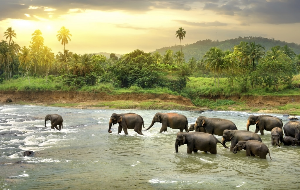 Olifanten in een rivier op Sri Lanka