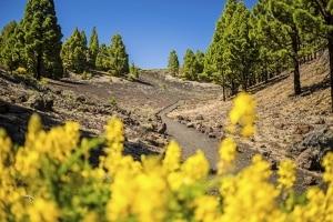 Bloemen, bos en wandelpad op La Palma