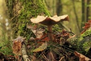 paddenstoel boom herfst