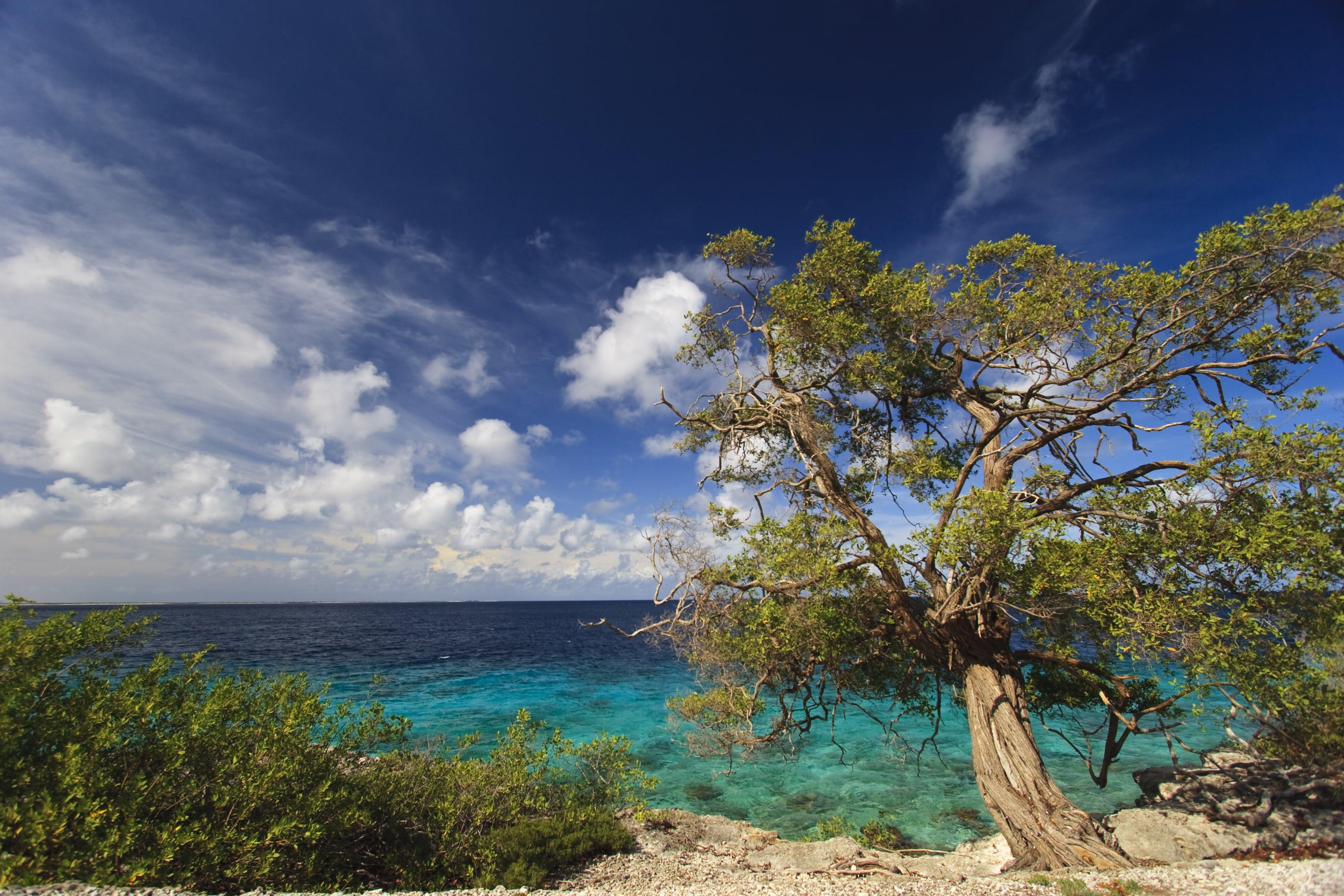 Zee en boom op Bonaire