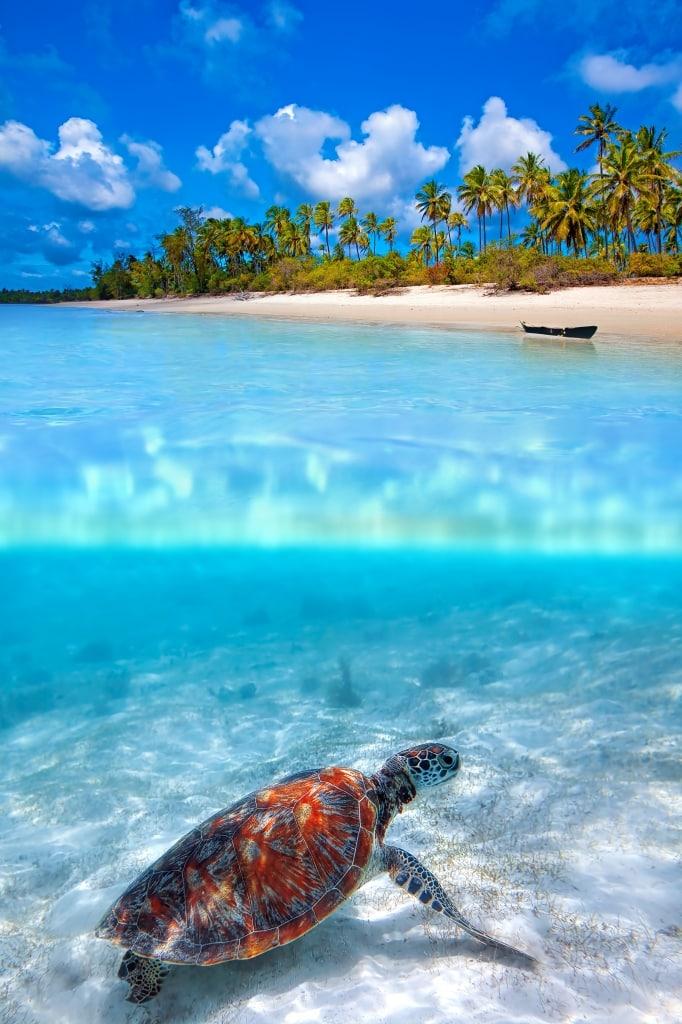 Zeeschildpad in de zee van Zanzibar