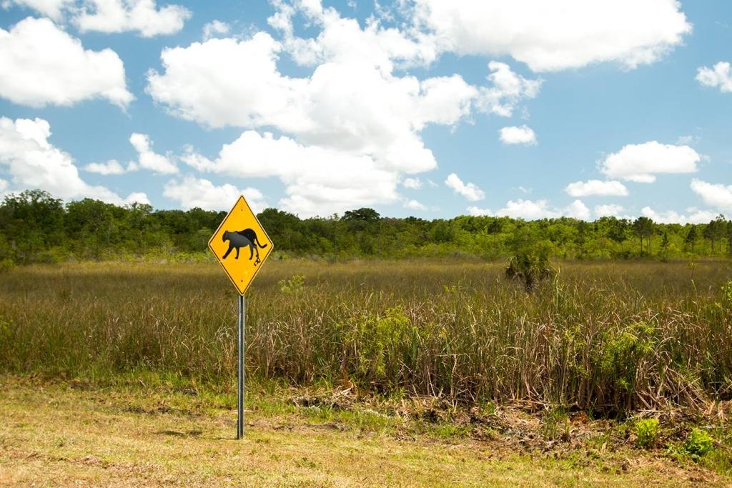 Verkeersbord dat waarschuwt voor overstekende panters in Everglades Nationaal Park, Florida, Amerika