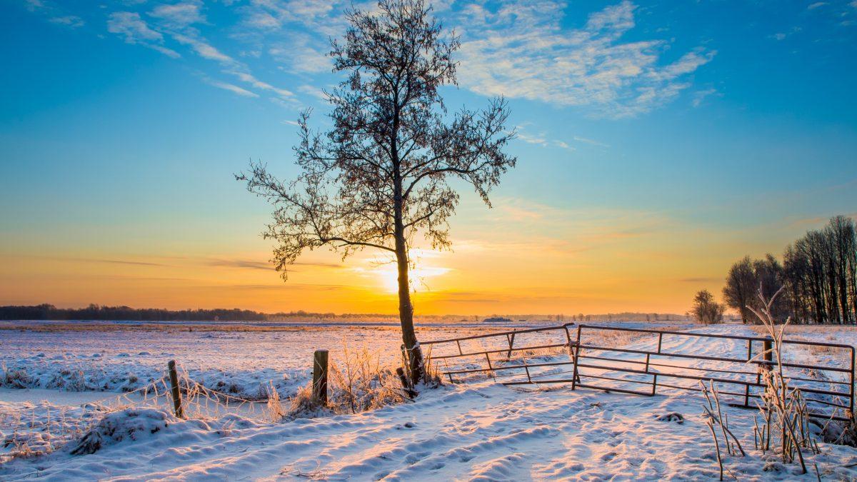 Winters landschap met sneeuw in Drenthe