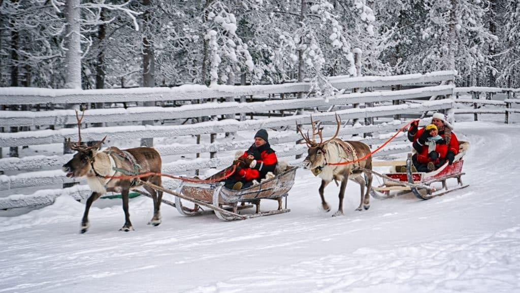 Sleetje rijden met rendieren in Lapland