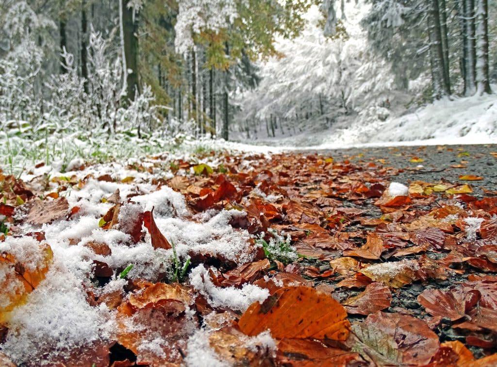 Sneeuw in op herstbladeren in Willingen, Sauerland, Duitsland