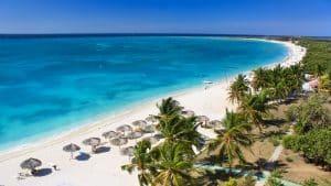 strand palmbomen gambia