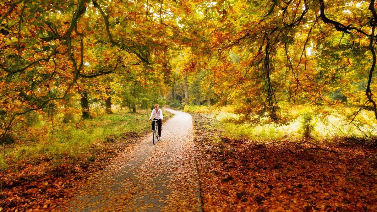 vrouw fiets bos herfst