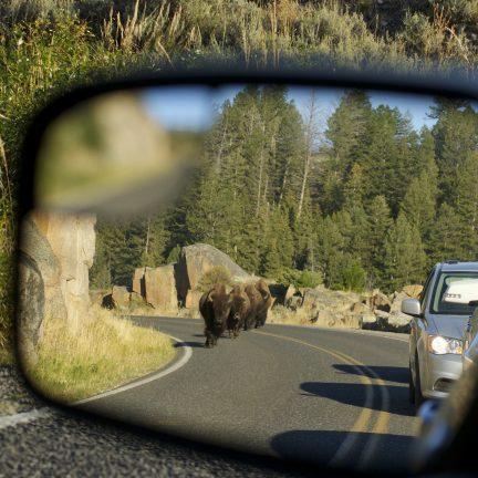 Amerikaanse bizons in de spiegel van een auto in Canada