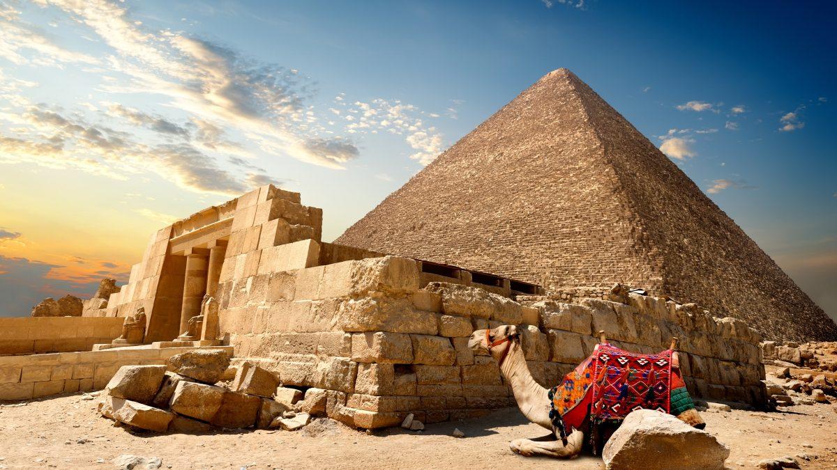 Kameel ligt voor een piramide in Egypte