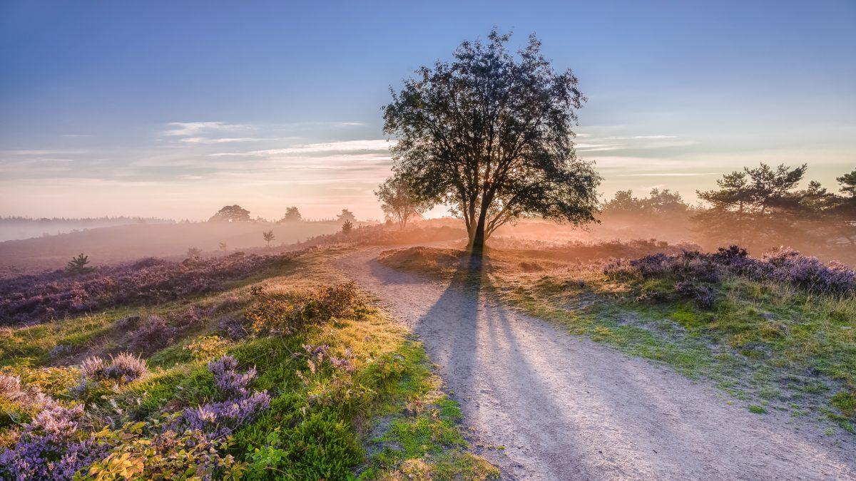 Mist over de heide in Gelderland