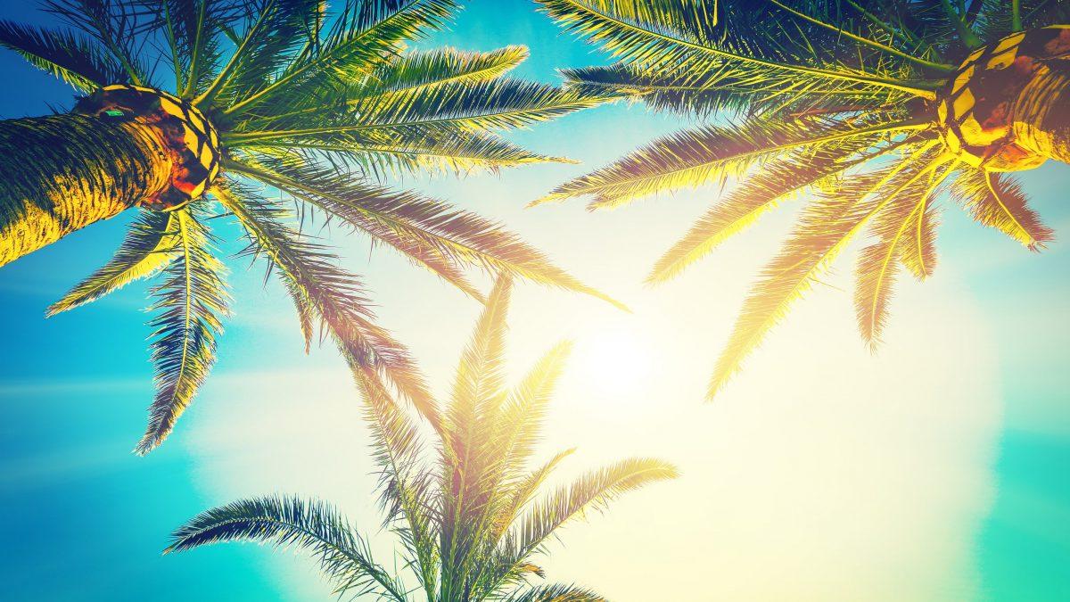 Palmbomen in Florida, Verenigde Staten