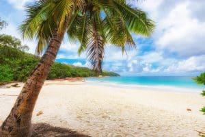palmboom op strand in jamaica