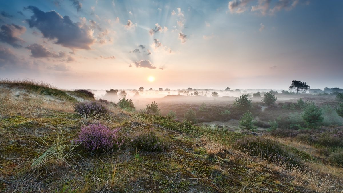 Zonsopkomst over de heide in Drenthe