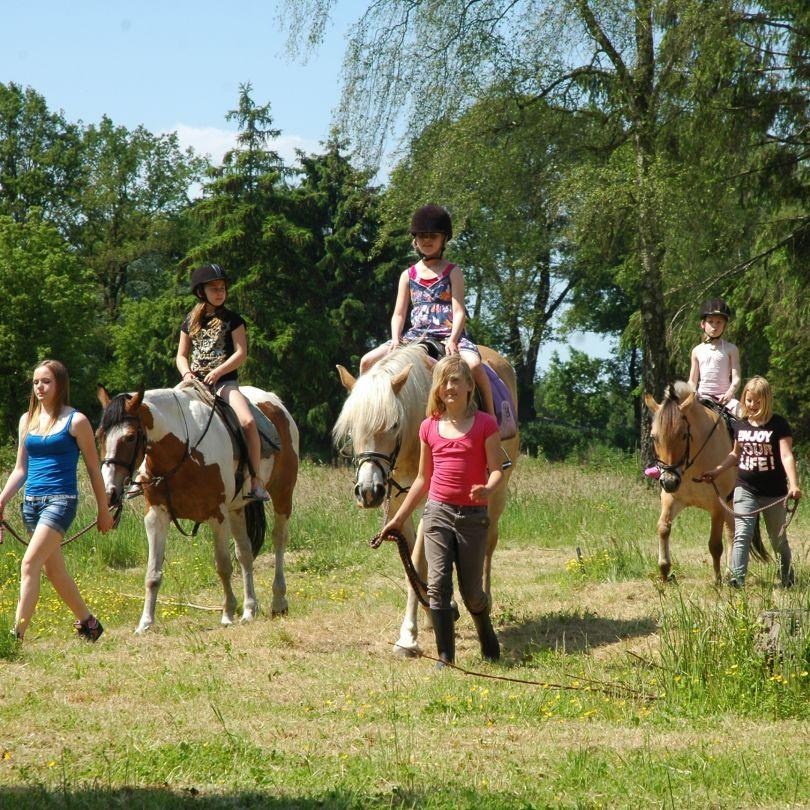 Paardrijden bij Vakantiepark Landgoed de IJsvogel in Voorthuizen, Gelderland
