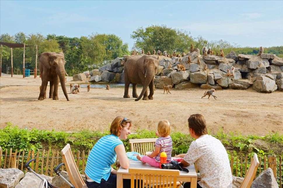 Olifanten bij attractiepark Beekse Bergen