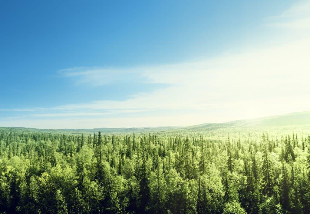 Uitzicht over een groot bos