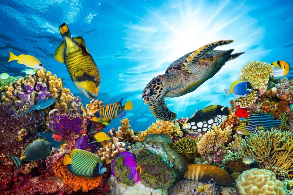Vissen zwemmen in het koraalrif van de Rode Zee