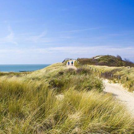 Duinen van Ter Heijde aan Zee in Zuid-Holland