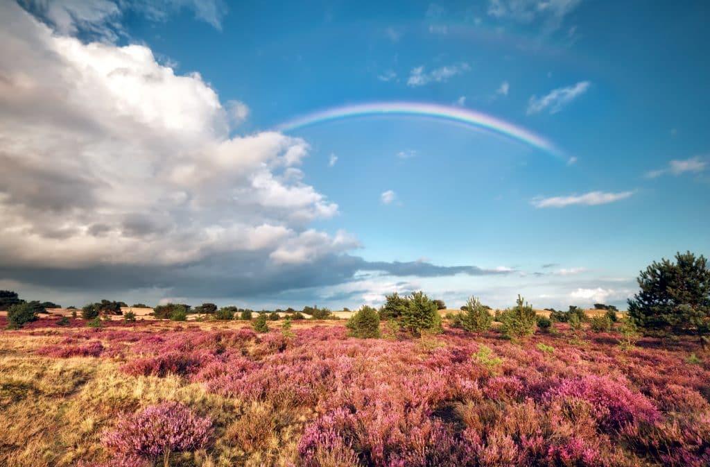Regenboog over een heideveld in Drenthe
