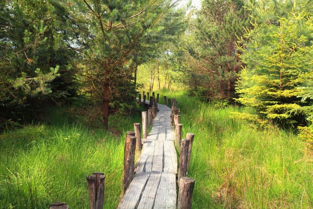 Nationaal park Dwingelderveld in Dwingeloo, Drenthe