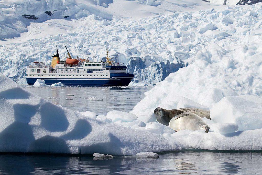 De Ocean Nova vaart tussen ijsbergen en zeehonden