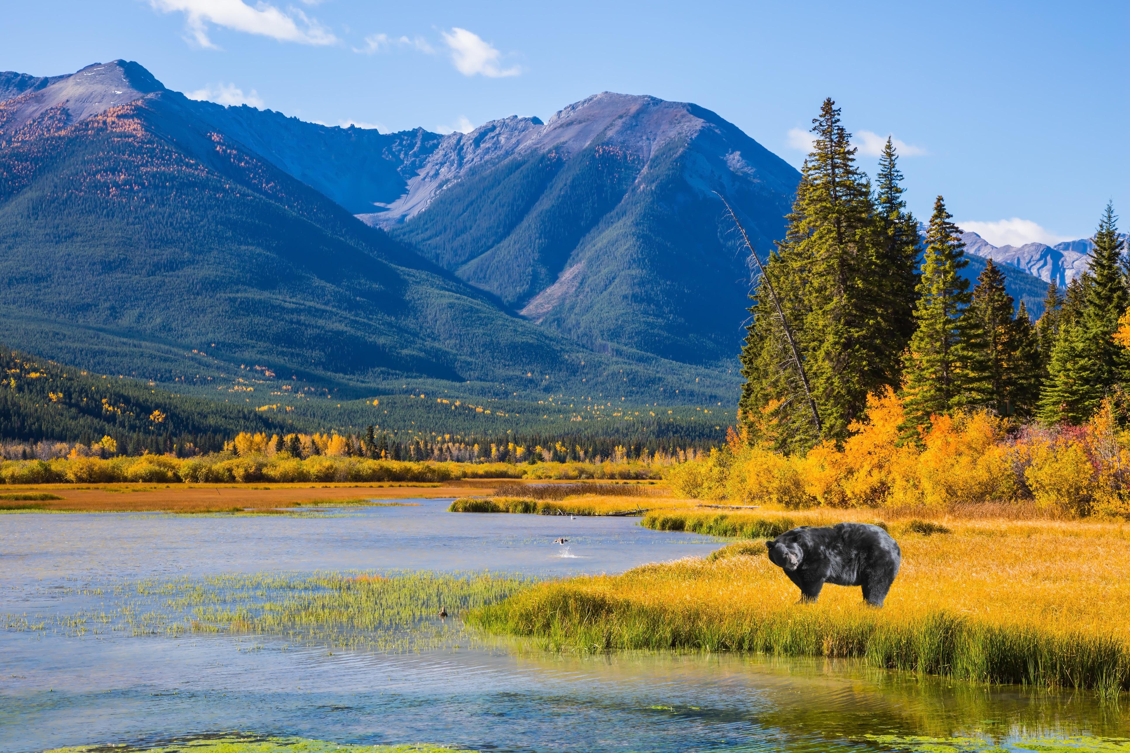zwarte beer bij een meer in canada