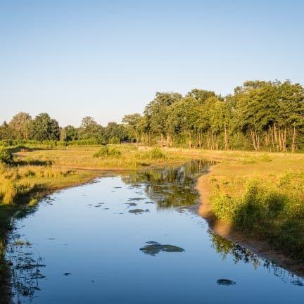 Rivier in de zomer in Twente, Overijssel