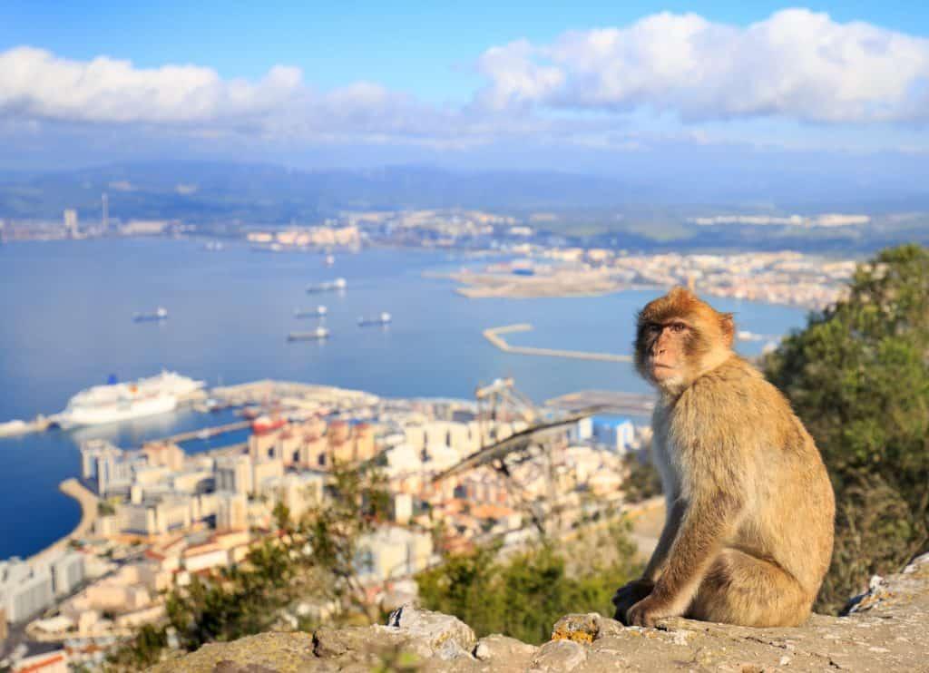 Aapje met uitzicht over de haven van Gibraltar