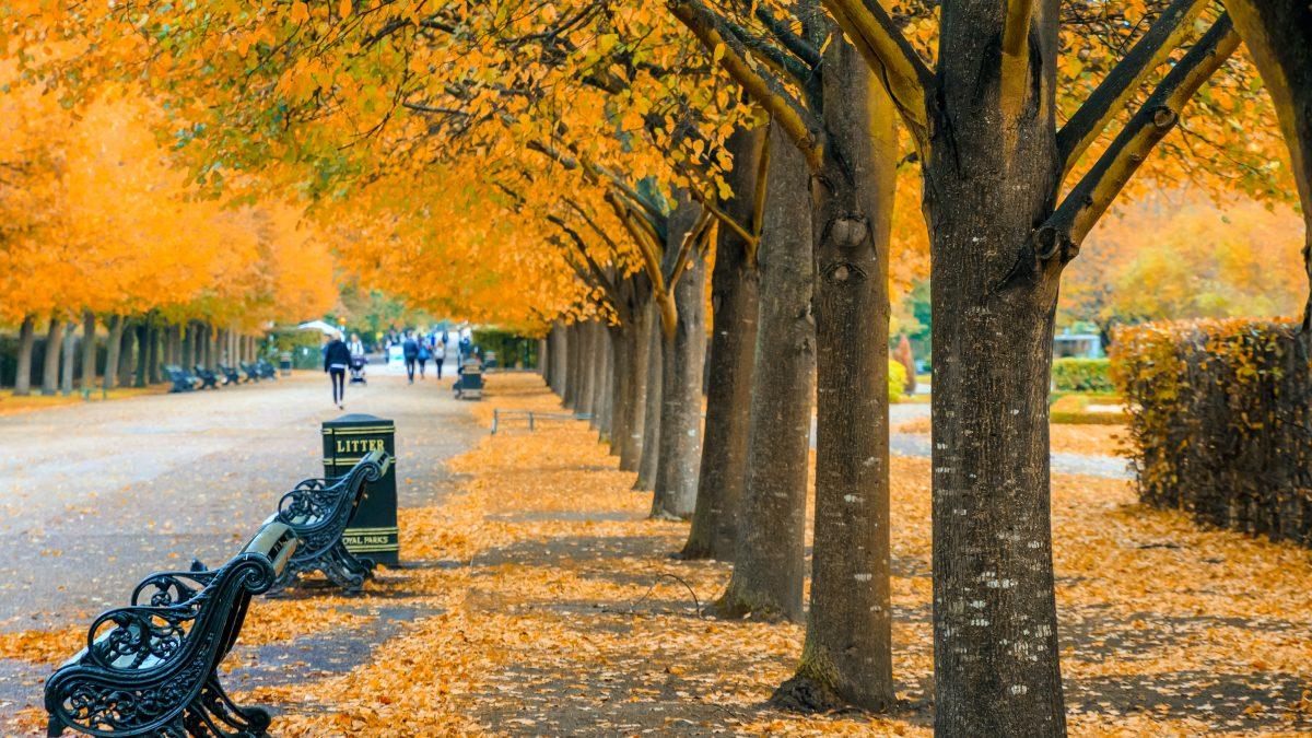 Bomen en bankjes tijdens de herfst in Hyde Park in Londen, Engeland
