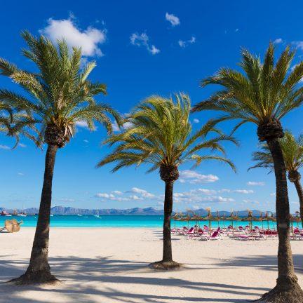Strand van Alcúdia met palbomen op Mallorca