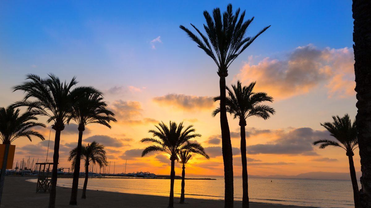 Zonsondergang met palmbomen in El Arenal, Mallorca