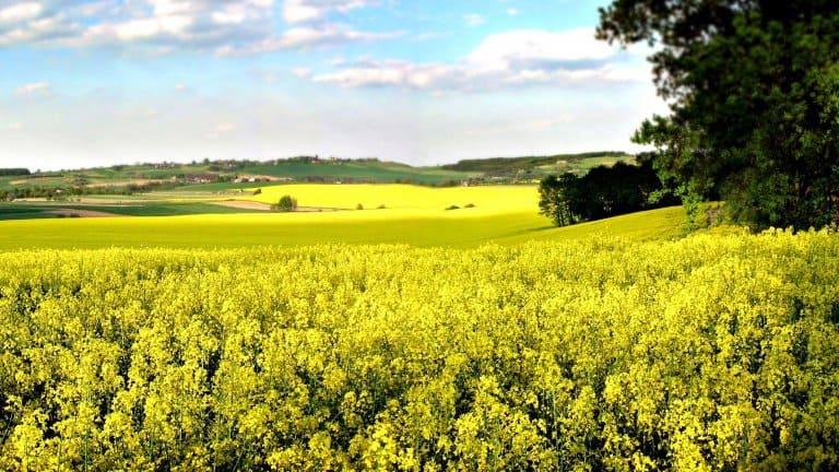 Heuvellandschap met bloemen in Limburg