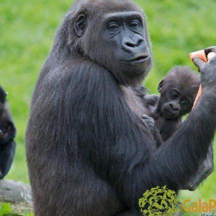 Gaia park Zoo Kerkrade in Limburg