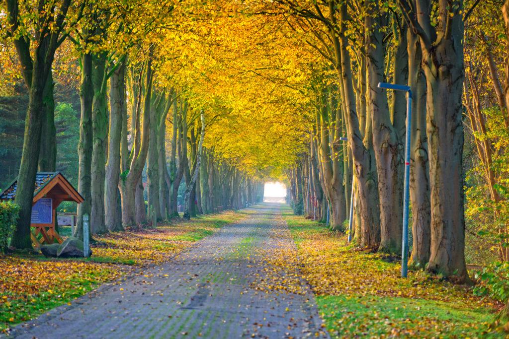 Laan met bomen in de herfst in Friesland