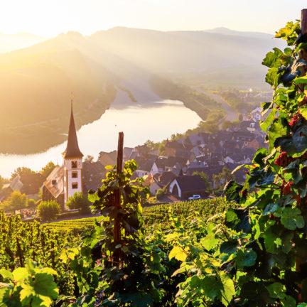 Uitzicht op de Moezel en wijngaard in Rijnland-Palts, Duitsland
