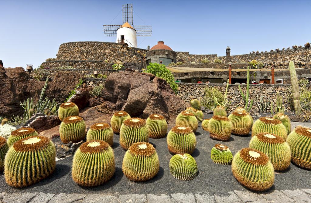 Cactussen en typische windmolen in Jardín de Cactus, Guatiza op Lanzarote