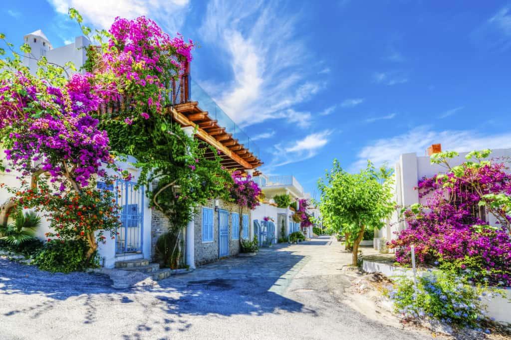 Prachtig gekleurde bloemen in Bodrum, Turkije