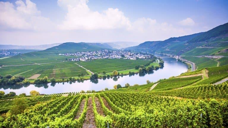Wijngaarden van Hotel Traube Löf in Löf, Duitsland